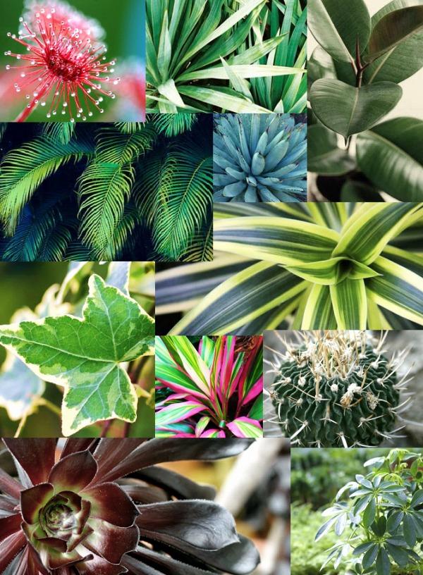 の 名前 植物 花や植物の名前を使ってペットの名前を考える!2~4文字の一覧